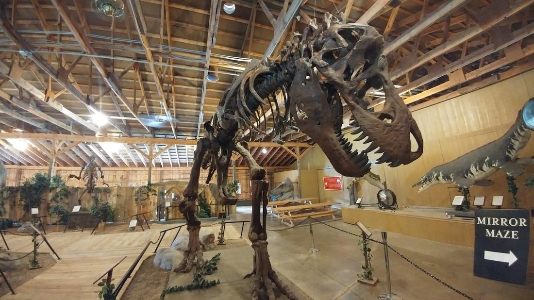 Museum Of Natural History London Dinosaur